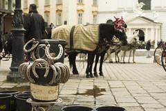 Waiting for customers (Svein K. Bertheussen) Tags: horses hester horseshoes hestesko hestogkjerre horsecarriage turister tourists vienna wien sightseeing austria österreich travel reise