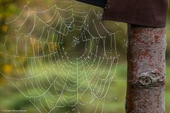 Herbstimpressionen - Perlenketten - II (J.Weyerhuser) Tags: nebel vollmond hechtsheim wassertropfen spinnennetz