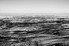 Jan (keko click) Tags: jan olivar olivo horizon horizonte bn bw lines lneas