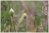 * (Dit is Suzanne) Tags: img9316 11062016 nederland netherlands нидерланды groningen гронинген reitdiep ©ditissuzanne canoneos40d wandeling walk прогулка лето summer zomer bloem flower цветок papaver poppy мак berm views50
