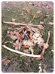 out my back door (ladybugdiscovery) Tags: fire wood leaves bark builtfire sticks cones