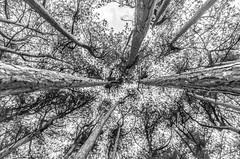 119 (Andrew J Horrocks) Tags: formby pinewoods freshfield liverpool trees