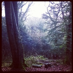 Devilsden Wood (Daniel James Greenwood) Tags: mobilephone mobilephonephotos instagram instagramphotography nokialumia
