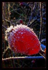 A frosty night End of November (scorpion (13)) Tags: november winter ice colors night garden crystals frosty frame photoart rosehip 2014