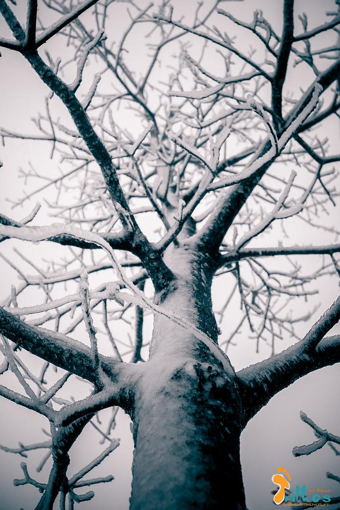 Neve na Cidade da Guarda - janeiro - 2015-16