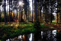 Herbst am Drrwiesweiher (Google-Hupf) Tags: herbst teich wald oberpfalz weiher