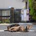 Three Cats at Komae