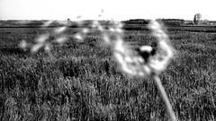 #7970 (UBU ♛) Tags: blackwhite noiretblanc blues biancoenero blackwhitefilm unamusicaintesta landscapeinblues bluubu luciombreepiccolicristalli ©ubu