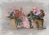 Just a Phone Shot (Digital Lady Syd) Tags: flowers paintedflowers