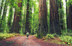 Between every two redwoods is a doorway to a new world. (Yinghai) Tags: people fern tree nature humboldt ancient trail redwoods oldgrowth