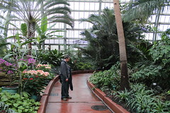 Dad reading info on the giant palm tree (Zach Frieben) Tags: chicago daddy dad garfieldconservatory tropicalplants 2014