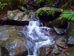 (D River) Tags: water rio forest river agua focus bosque tones cascade cascada enfoque tonalidades yunquepuertorico