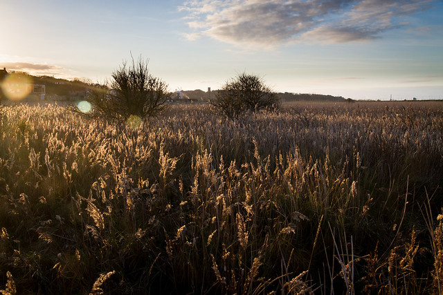 Cley Marshes; Winter Sun