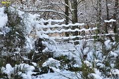 0036 winter 2014 (modekopp) Tags: schnee winter snow frozen frost frosty frosen gooutside winterimpression germanywinter fantasticnature frozensnow frozeninsnow germanysnow amazingphotographs frostforest winter20142015 eifelwinter20142015 modekopp