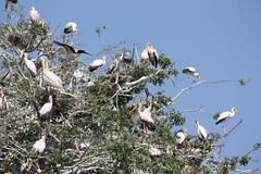 Stork Tree