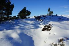 Where to Go? (steve_whitmarsh) Tags: trees mountain snow ice landscape scotland highlands cairngorms scottishhighlands