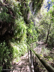 Blue Mountains - Forest Path (simonevanbergen) Tags: trees mountains water forest waterfall rainforest rocks ride australia bluemountains katoomba leura svb 2015 scenicworld simonevanbergen