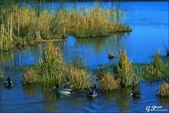 LAC D'AYDAT, TERRE D'AUVERGNE (Gilles Poyet photographies) Tags: lac soe auvergne puydedme autofocus aydat aplusphoto artofimages rememberthatmomentlevel1
