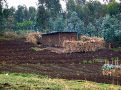 Ruhengeri Farm