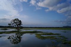 Tissamaharama - Debara wewa 10 (luco*) Tags: lake tree lac sri lanka arbre wewa tissa tissamaharama flickraward debara flickraward5 flickrawardgallery