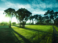 The Line Between Blue and Green (Steve Taylor (Photography)) Tags: park blue trees winter shadow newzealand christchurch sky cloud sun black green sunshine silhouette sunrise dawn canterbury nz southisland hagley