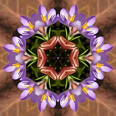 Kaleido Abstract 912 (Lostash) Tags: abstract art nature edited patterns shapes symmetry forms kaleidoscopes