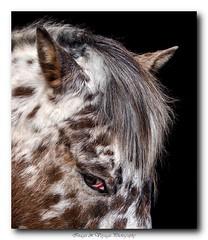 pb_2475 (Fernand EECKHOUT) Tags: portrait mars france animal photoshop cheval lumix photography photos forum olympus adobe corrze omd proxy lightroom 2015 animalier em5 lachamp olympusfrance imagesvoyages poulbeau19 m40150pro