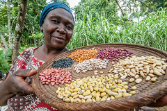 Bean diversity helps farmers tackle climate change