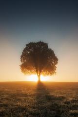 the lonely tree (Rainer Schund) Tags: lonely tree baum sunrise sunshine sunrays light lichtstimmung lichterfest ilmenau lichtstrahlen lightrays licht lichter nikon nikond700 natur nature natureexploring naturemasterclass nebel gegenlicht