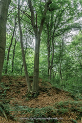 photomoments-mk_2016_02836.jpg (photomoments-mk) Tags: buche deutschland geografie natur sachsenanhalt wald wefensleben geography germany nature saxonyanhalt tree wood