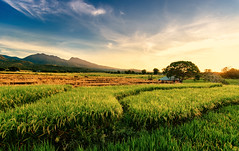 Sunrise over rice field, Dintor, Flores (syukaery) Tags: travel flores indonesia nikon d750 nikkor ntt 1635mm