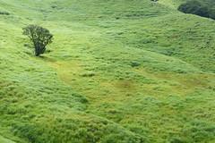 19Tonomine Highland (anglo10) Tags:    field  japan