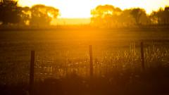 Morning glory (jarnasen) Tags: morning trees copyright sunlight nature field sunrise fence landscape dawn golden early nikon bright sweden outdoor handheld sverige poles freehand scandinavia landskap telezoom stergtland d810 nikon70300mmf4556 sttuna nordiclandscape jarnasen jrnsen