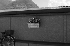 Lungolago Lugano (AmericanCowgirl95) Tags: lugano ticino switzerland longlake lake ceresio