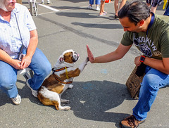 high five (shutter_junkee) Tags: street dog pet english alaska anchorage streetphoto highfive