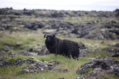 8Y2B1380 (zmotoly) Tags: iceland sland snfellsnes