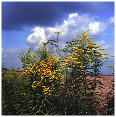 blue and yellow (/nur mit Film/just Film/) Tags: hasselblad500cm himmel heaven kodakektar100 canonscan9000fmkii