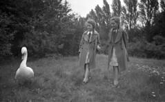 Wary (Arne Kuilman) Tags: germany 6x9 mediumformat 1930s thirties europe blackandwhite photonotmine maxmller ldenscheid swan zwaan