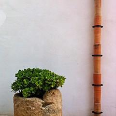 Sicilia 2016 (themancos) Tags: sicilia sicily mozia isoladimozia moziaisland vaso cactus vase succulent