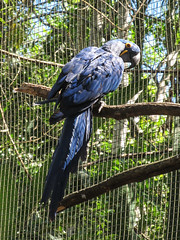 """Le Parc des Oiseaux d'Iguaçu: la grande volière aux perroquets <a style=""""margin-left:10px; font-size:0.8em;"""" href=""""http://www.flickr.com/photos/127723101@N04/29642943875/"""" target=""""_blank"""">@flickr</a>"""