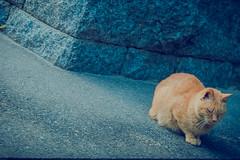 Dazaifu - Fukuoka (Photographer Paulinho Faria) Tags: travel family winter vacation people holiday familia japan train pessoas asia dream frias paz martialarts jardim templos kurume japo jiujitsu fukuoka avio trem inverno sonho buda jardins japoneses brasileiros budismo dazaifu jud artesmarciais karat outroladodomundo terradosol templosjaponeses templodazaifu