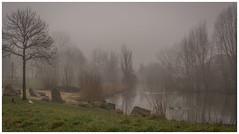mist (stevefge) Tags: trees winter mist netherlands nederland beuningen nederlandvandaag