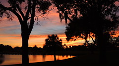 Another wild Bradenton Florida Sunset. (Jim Mullhaupt) Tags: christmas pink blue sunset red wallpaper vacation sky orange lake holiday color reflection tree home water weather silhouette yellow clouds landscape pond oak backyard nikon flickr december sundown florida palm coolpix sarasota bradenton gulfcoast p510 mullhaupt cloudsstormssunsetssunrises jimmullhaupt