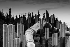 Trans-Alaska Pipeline System (TAPS) (Adriano Soldatelli) Tags: alaska viagem pipeline fairbanks américas estadosunidos alyeskapipeline américadonorte
