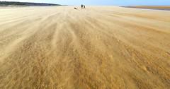 _C0A3678R Shifting Sands, Jon Perry - Enlightenshade, 10-1-15+ zae (Jon Perry - Enlightenshade) Tags: beach norfolk stormy sandstorm windswept holkham windstorm blowingsand verywindy 10115 shiftingsands jonperry enlightenshade arranginglightcom 20150110