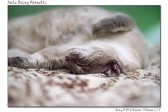 nala-ador (hodad66) Tags: cat feline nala nikon10518 sonya7ii