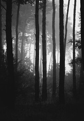 distance (itawtitaw) Tags: autumn light white black cold tree nature silhouette fog contrast sunrise dark landscape blackwhite woods solitude shadows bright 85mm tranquility shades naturereserve schwarzweiss canonef85mm18 canoneos60d