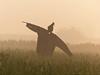 Who's Scared Of The Scarecrow? .. _GD_P1000571 (Gaurav Dinesh) Tags: ramalingam fourseasonsgarden