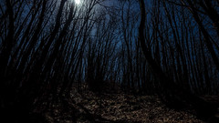 Lost in the woods, chapter 2 (Mat Viv) Tags: longexposure trees italy moon night forest canon lost eos woods italia wideangle tuscany nightsky toscana canoneos wanderer nightshoots 14mm samyang canonphotography xti canoneos400d canon400d canonxti nightphotoghraphy samyang14mm