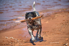 IMG_9266 (jackgrayphotography) Tags: pets lake dogs water animals swimming canon is friend efs 18200mm f3556 jackgrayphotography